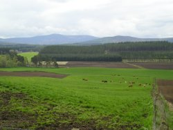 Scenic view to Royal Deeside from near holiday accommodation, Banchory at Cluny Crichton farm, Raemoir, Banchory near Aberdeen in North East Scotland